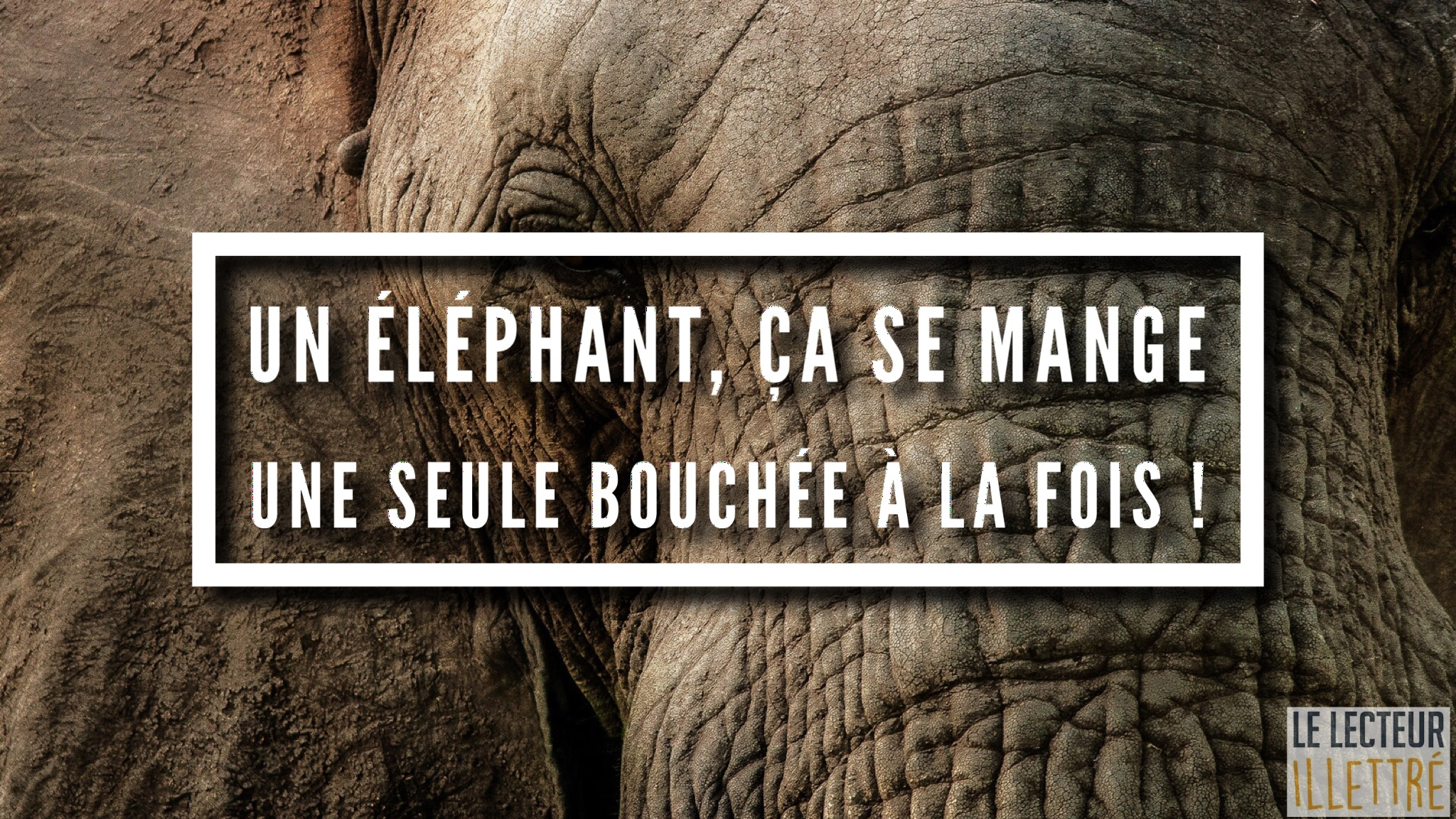 Un éléphant, ça se mange une seule bouchée à la fois